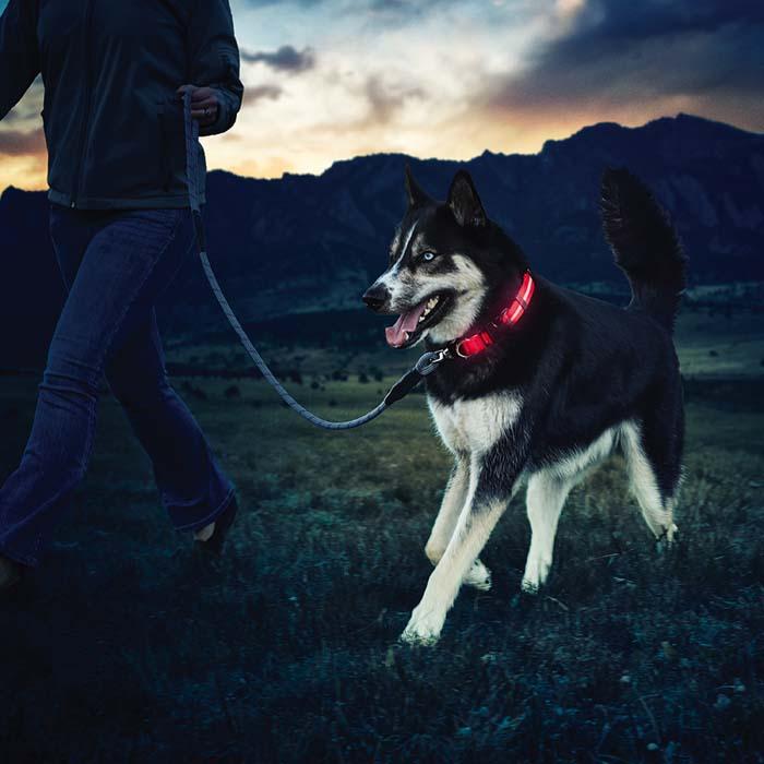 NiteDawg® LED Dog Collar – Dawgs On The Go